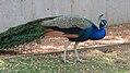 Assiniboine Park Zoo, Winnipeg (480471) (9445000391).jpg