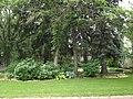 Assorted foliage (7571329428).jpg
