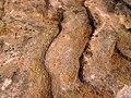 Asymmetrical ripple marks in quartzite (Baraboo Quartzite, upper Paleoproterozoic, ~1.7 Ga; southern shore of Devil's Lake, Devil's Lake State Park, Wisconsin, USA) 4 (18200155544).jpg