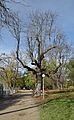 Auer-Welsbach-Park 13.jpg