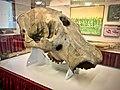 Aurora Mastodon Skull.jpg