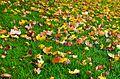 Autumn-89224.jpg
