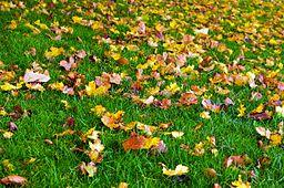 https://upload.wikimedia.org/wikipedia/commons/thumb/4/43/Autumn-89224.jpg/256px-Autumn-89224.jpg