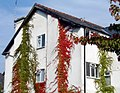 Autumn Ivy (11015559).jpg