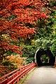 Autumn foliage 2012 (8253653780).jpg