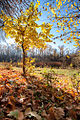 Autumn in Volgograd Oblast 003.jpg