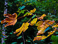 Autumn is coming (21378474049).jpg