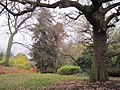 Avenue House Grounds trees.JPG