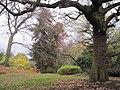 Avenue House Grounds trees.JPG