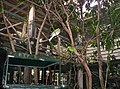 Aviary-at-Brisbane-Forest-Park-2.JPG