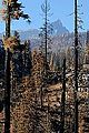 B&B Burn Near Three Fingered Jack, Oregon Cascades 1.jpg