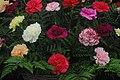BBC Gardeners World - 2017-06-15 - Andy Mabbett - 21.jpg