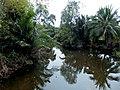 Bang Kobua, Phra Pradaeng District, Samut Prakan, Thailand - panoramio (5).jpg