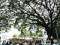 Bangalore Sanjay nagar street trees 7.jpg