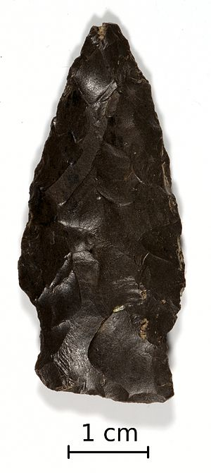 Bare Island projectile point - A Bare Island projectile point made of flint from central New York State.
