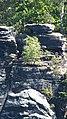 Bastei-Leben auf nacktem Stein.JPG
