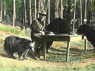 "Horace M. Albright - Supt. Albright enjoys a ""bear dinner"", Yellowstone National Park, 1922"