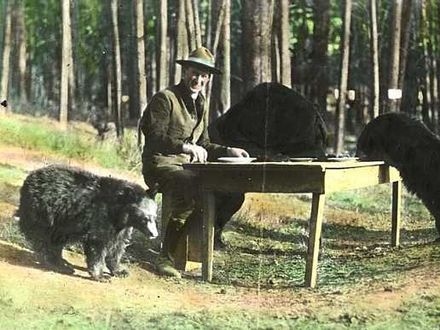 Park Superintendent Horace M. Albright and dinner guests, 1922. The feeding of black bears was popular with tourists in the early days of the park, but led to 527 injuries between 1931 and 1939. Bear dinner 1922.jpg