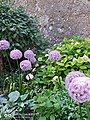 Beautiful landscapes surrounding Mozart's birthplace- Purple flowers-balls as notes of music.jpg