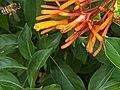 Bee and orange flower 10.jpg