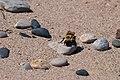 Bee on a Stone AIBE-1.jpg