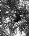 Beehive in a tree (3585991574).jpg