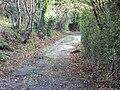 Bidston Hill - DSC04367.JPG