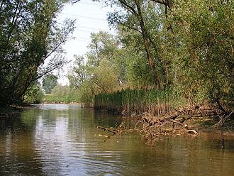 Biesbosch National Park - Hollandse Biesbosch near Dordrecht, Netherlands