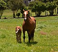 Big Horse & Baby Horse at Whenuapai,West Auckland.NZ (12096056075).jpg
