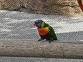 Bird at the LB aquarium - panoramio.jpg