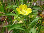 Black Point Wildlife Drive, Merritt Island FL - Flickr - Rusty Clark (211).jpg