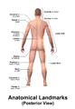 Blausen 0021 AnatomicalLandmarks Posterior.png