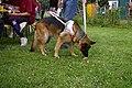 Blindenhund.jpg