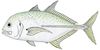 Bluespotted trevally