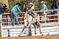 Boddington Rodeo 2015 (128247431).jpeg