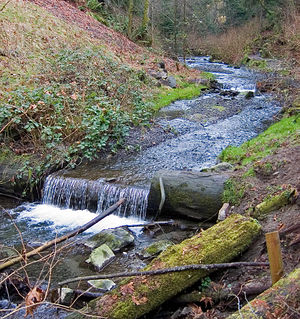 Boeing Creek Stream in Shoreline, United States