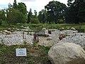 Bog Garden - geograph.org.uk - 908978.jpg