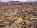 Boggy Moorland near Carn a' Chuaille - geograph.org.uk - 786784.jpg