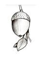 Bolota, fruto do carvalho. Suas sementes serviam de alimento para os nativos..pdf