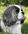 Boogie Dog (46678290).jpeg