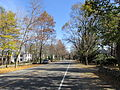Boston Post Road, Weston MA.jpg