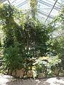 Botanička Bašta Jevremovac 016.JPG