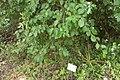Botanical Garden on Mount Scopus visit 2011 05.JPG