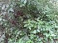 Botanical bushes.jpg