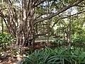 Botanical garden El'Hamma 4.jpg