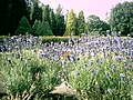 Botanical garden in Poznań16.JPG