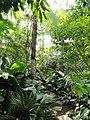 Botanischer Garten Freiburg - DSC06358.jpg