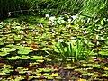 Botanischer Garten Giessen Seerosen.JPG