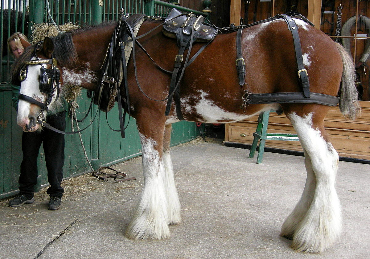 Harness saddle - Wikipedia