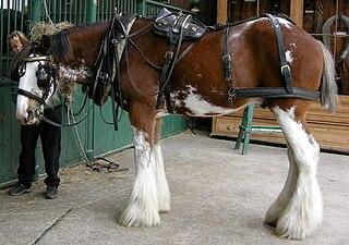 Harness saddle